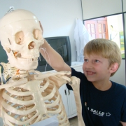 E de Esqueleto