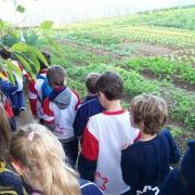 2º ano realiza turismo na Quinta da Estância