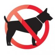 Proibida a entrada de cachorros