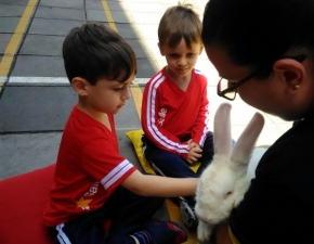 A visita fofa do coelho Kuiky
